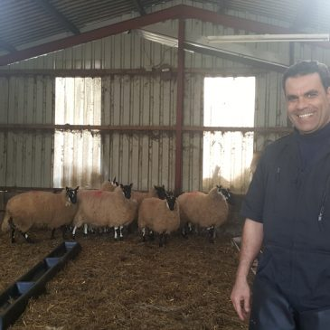 Genomics can benefit sheep industry